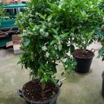 arbres-fruiters-14