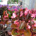 plantes-de-temporada-30